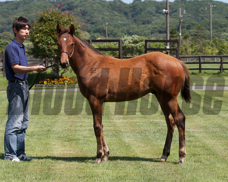 Lethal Heat in Japan with her 2012 Smart Strike colt.<br /> Photo by: Kate Hunter