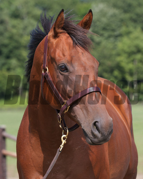 Dubawi Heights at Shadai Farm in 2012, in foal to Deep Impact.<br /> Photo by: Kate Hunter