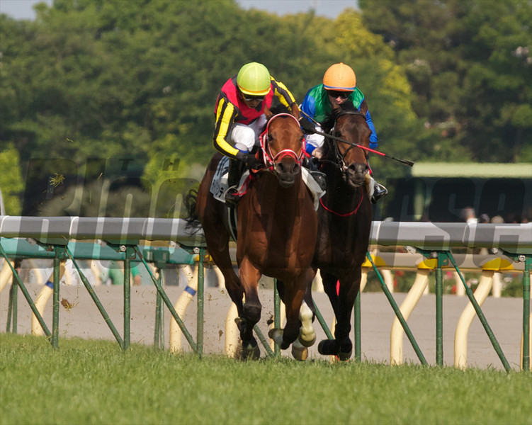 Deep Brillante wins the 79th Japanese Derby.<br /> Photo by: Kate Hunter