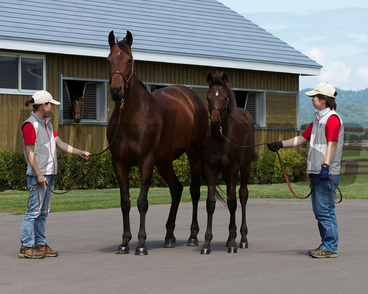 Dancing Edie in Japan with her 2012 Zenno Rob Roy filly.<br /> Photo by: Kate Hunter