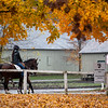 The remaining horses walk through the fall foliage at the Oklahoma Training Center Wednesday Oct. 28, 2020 in Saratoga Springs< N.Y.   Photo by Skip Dickstein