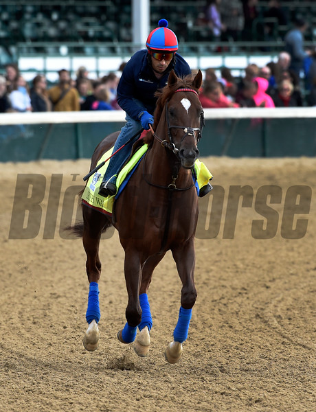Irish War Cry gallops at Churchill Downs May 3, 2017 in Louisville, KY.  Photo by Skip Dickstein
