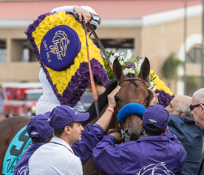 Battle of Midway wins the Breeders Cup Dirt Mile on November 3, 2017. Photo by Skip Dickstein.