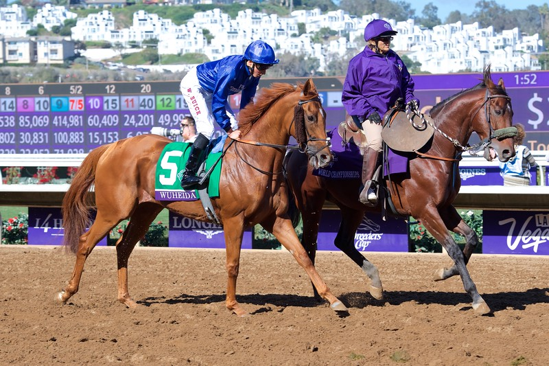 Wuheida before winning the Breeders Cup Filly and Mare Turf on November 4, 2017. Photo by Anne Eberhardt.