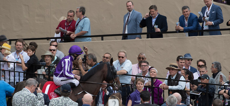 Mendelssohn makes his entrance before the Breeders Cup Juvenile Turf on November 3, 2017. Photo by Skip Dickstein.