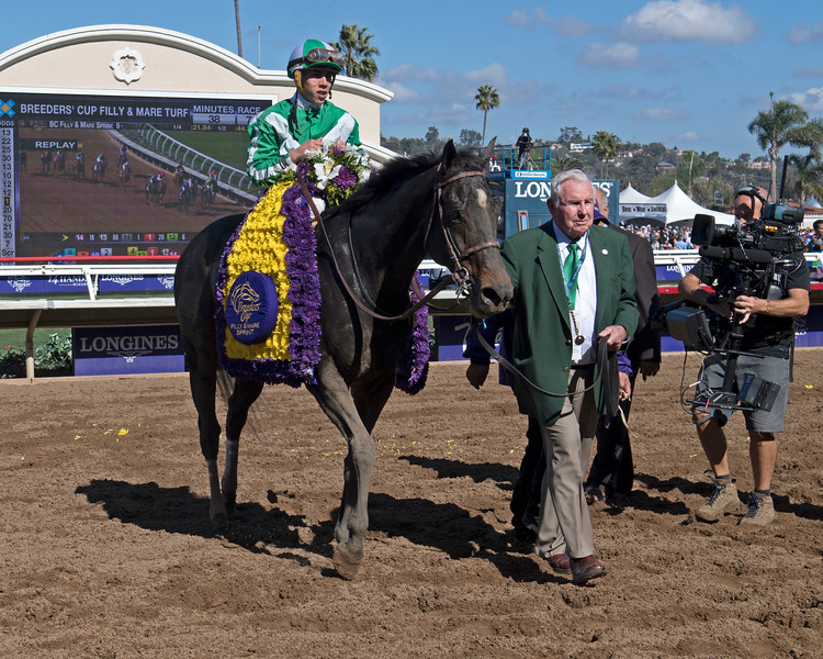 Bar of Gold wins the Breeders Cup Filly and Mare Sprint on November 4, 2017. Photo by Anne Eberhardt.