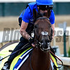 Thunder Snow gallops at Churchill Downs May 3, 2017 in Louisville, KY.  Photo by Skip Dickste