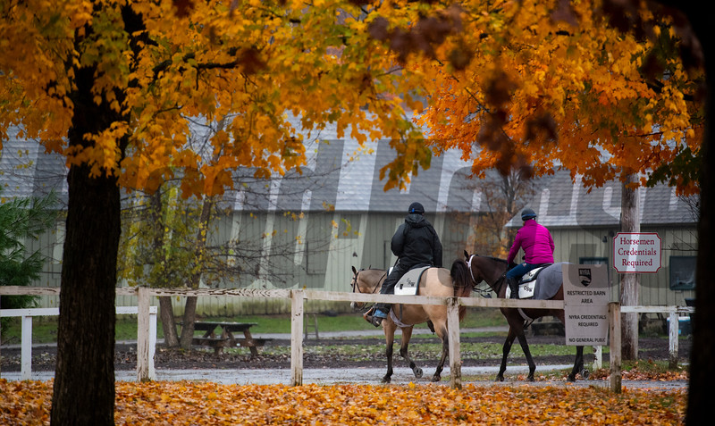Trainer George Weaver and his wife and assistant Cindy ride through the fall foliage at the Oklahoma Training Center Wednesday Oct. 28, 2020 in Saratoga Springs< N.Y.   Photo by Skip Dickstein
