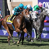 Stormy Liberal wins the Breeders Cup Turf Sprint on November 4, 2017. Photo by Skip Dickstein