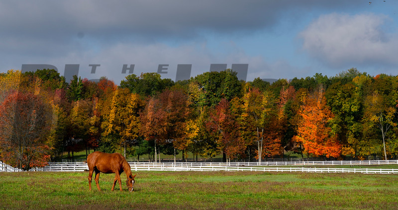 A broodmare walks the paddock at Song Hill Farm Wednesday Oct. 14, 202 in Stillwater, N.Y.    Photo by Skip Dickstein