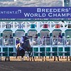 Golden Dragon broke from the gate early before the Breeders Cup Juvenile on November 4, 2017. Photo by Skip Dickstein.