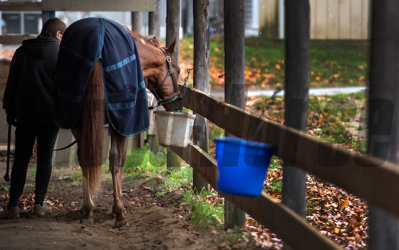 Second of July cools out from his breeze at the Oklahoma Training Center Wednesday Oct. 28, 2020 in Saratoga Springs< N.Y.   Photo by Skip Dickstein