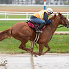 Second of July with former jockey Robbie Davis breezes at the Oklahoma Training Center Wednesday Oct. 28, 2020 in Saratoga Springs< N.Y.   Photo by Skip Dickstein