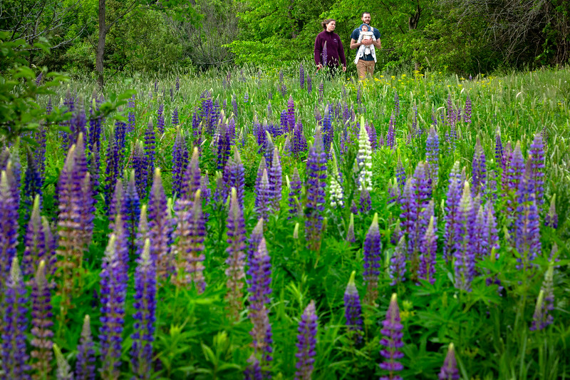 wildflower-capisic-pond-park-portland-troy-r-bennett-10.jpg