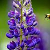 wildflower-capisic-pond-park-portland-troy-r-bennett-6.jpg