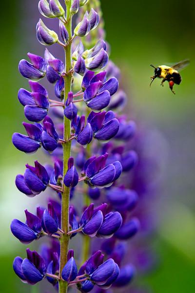 wildflower-capisic-pond-park-portland-troy-r-bennett-5.jpg