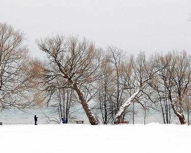 20080202_28630 PB Tree SnowMan