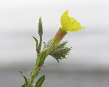 N0842 Wildflower