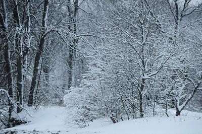 20080207_28845 Snow Woods
