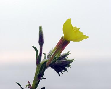 N0841 Wildflower