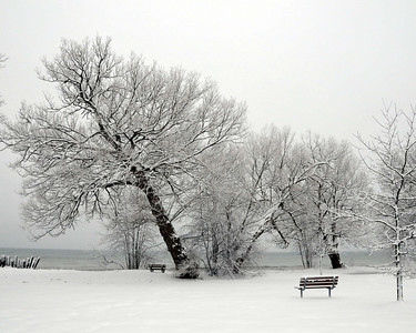 20080206_28827 PB Tree Snow