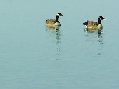 020 Two Geese