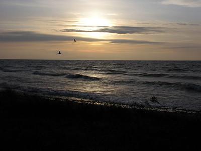 004 Seagulls