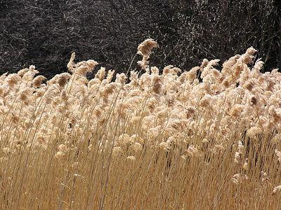 0802 Grass