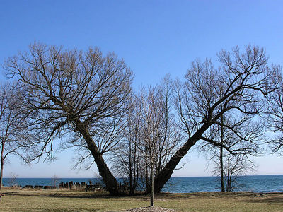 0761 Pickering Beach Tree