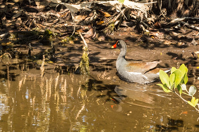 HighLight_Nelson_043_022