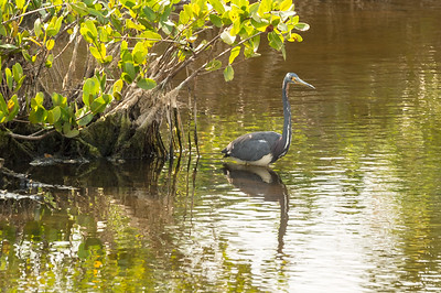 HighLight_Nelson_045_147