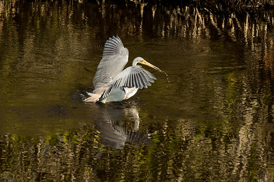 HighLight_Nelson_043_066