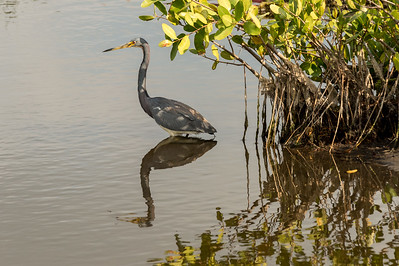 HighLight_Nelson_045_148