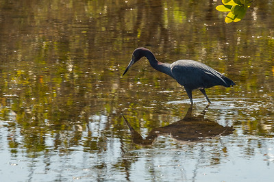 HighLight_Nelson_043_126