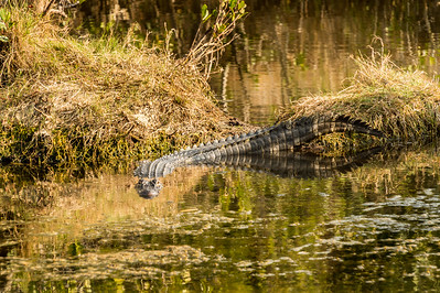 HighLight_Nelson_045_325