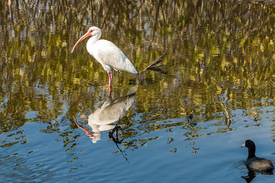 HighLight_Nelson_043_060