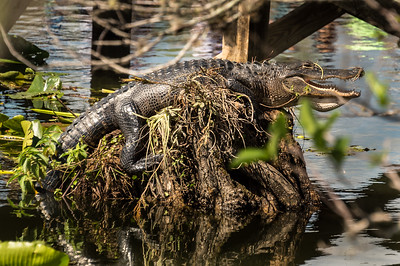 HighLight_Nelson_051_069