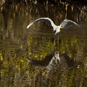 HighLight_Nelson_043_064