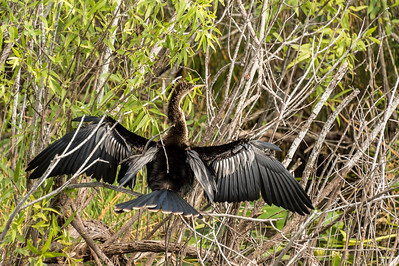 HighLight_Nelson_051_011