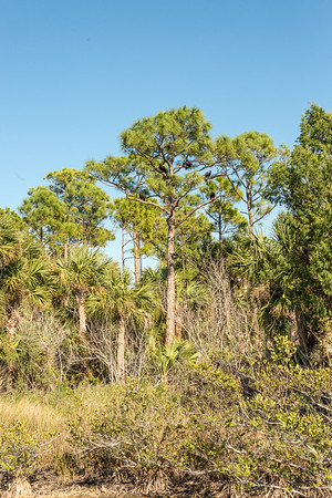 HighLight_Nelson_043_148