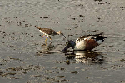 HighLight_Nelson_045_167