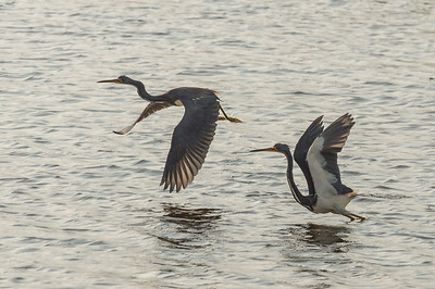 HighLight_Nelson_045_239