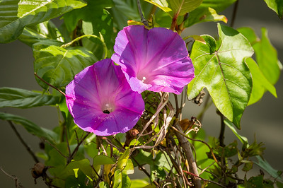 HighLight_Nelson_051_005