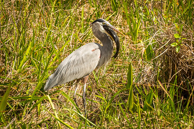 HighLight_Nelson_051_018