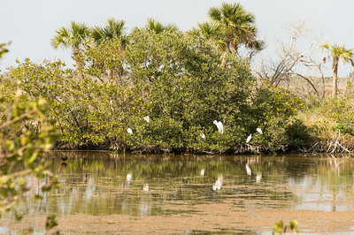HighLight_Nelson_045_120