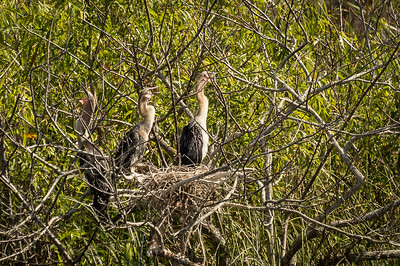 HighLight_Nelson_051_002