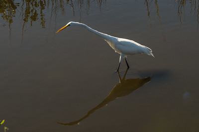 HighLight_Nelson_043_103