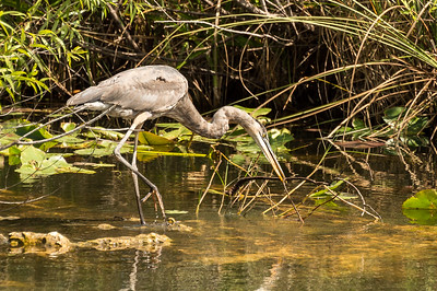 HighLight_Nelson_051_089