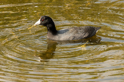 HighLight_Nelson_045_138