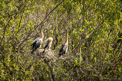 HighLight_Nelson_051_001